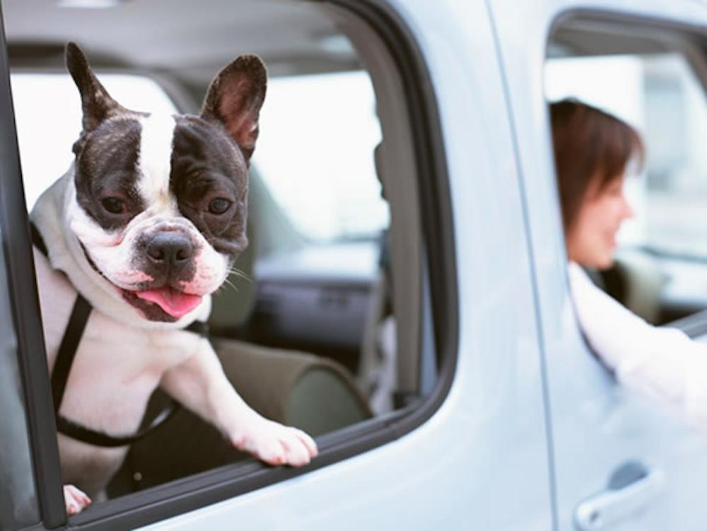 ペットと一緒に旅に行こう